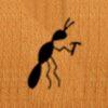 05 – Ant