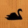 150 – Swan